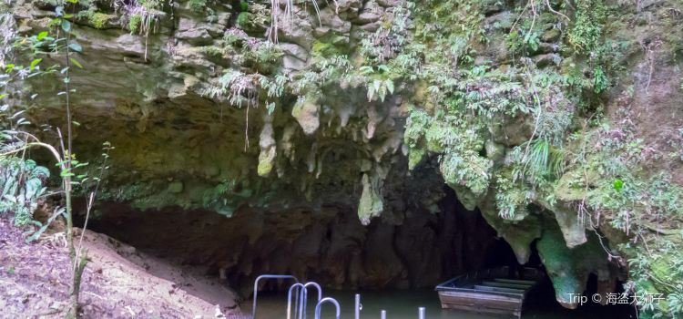 Waitomo Glowworm Caves1