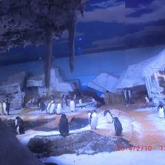 武漢海昌極地海洋世界用戶圖片
