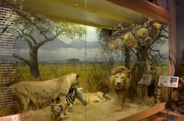 Finnish Museum of Natural History