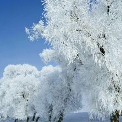 那拉提國際滑雪場用戶圖片