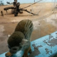 Beijing Wildlife Park User Photo