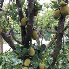 Kenting Wanli Dong User Photo