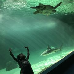 Zoo Aquarium de Madrid User Photo