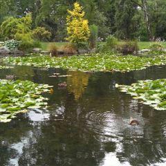 Queens Gardens User Photo