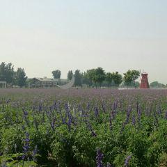 Purple Valley Eden User Photo