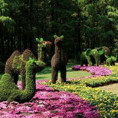 南錫植物園用戶圖片