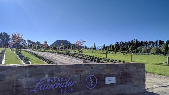 와나카 라벤더 팜