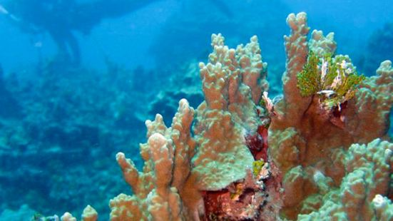 珊瑚花園潛點潛水