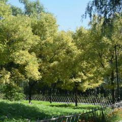Chaoyang Park User Photo