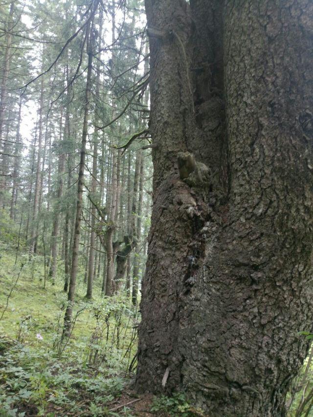 北山國家森林公園