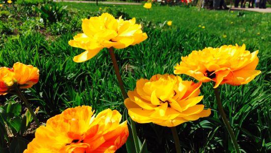 Sokolniki Large Rose Garden