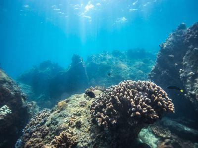 蜈支洲島潛水