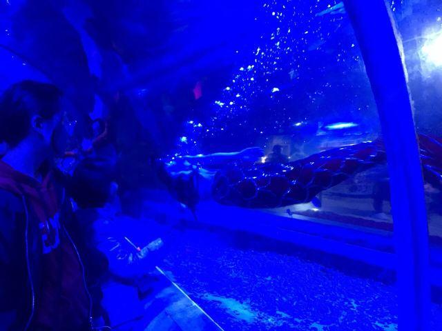 綿陽海底世界