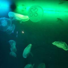 綿陽海底世界用戶圖片