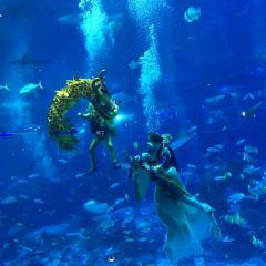Busan Aquarium User Photo