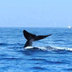 美蕊沙出海觀鯨用戶圖片