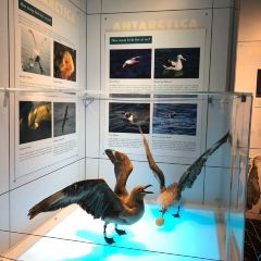基督城國際南極中心用戶圖片