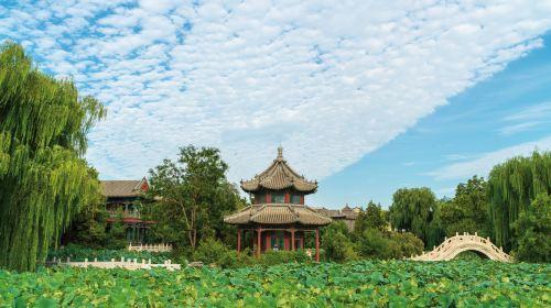 Ancient Lotus Flower Pond