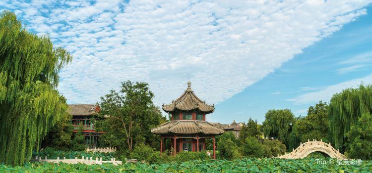 Ancient Lotus Flower Pond1