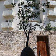 Old Jaffa User Photo