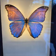 California Academy of Sciences User Photo