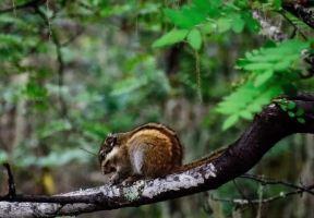 森林公園吸氧計劃!國內這9個空氣絕佳的好地方不get一下嗎?