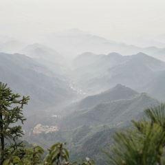 大樹王景區用戶圖片