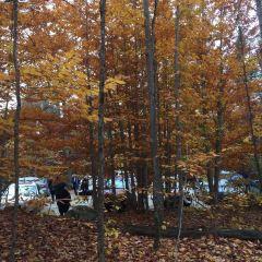 Jiguan Hill Forest Park of Xichou User Photo
