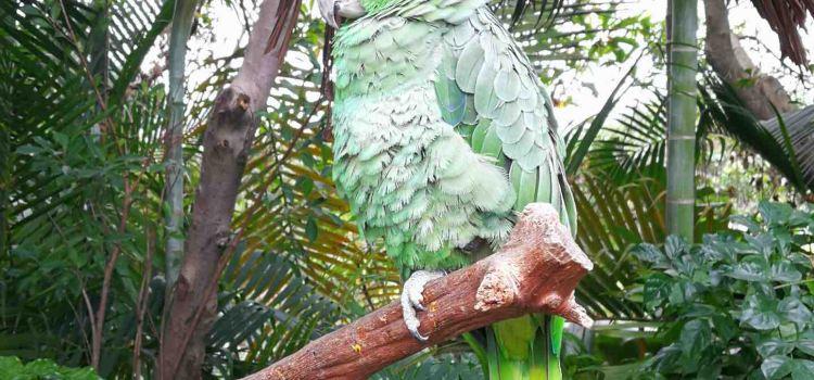 Chimelong Bird Park2