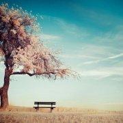 天生自由寂寞