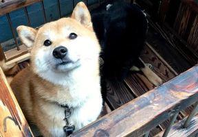"""沒想到你是這樣的""""江城"""",今天終於認識你了!"""