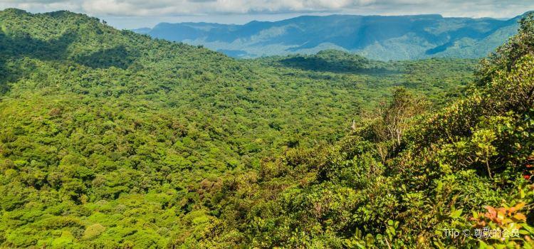 Monteverde Cloud Forest Biological Preserve2