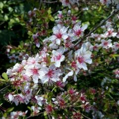 Peach Blossom Island User Photo