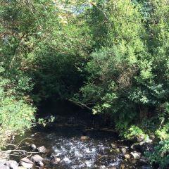 Glendalough State Park用戶圖片