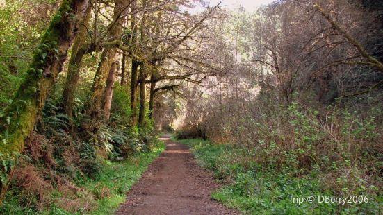 Big River Haul Road - Big River Trail