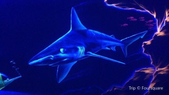 索契海洋探索世界水族館