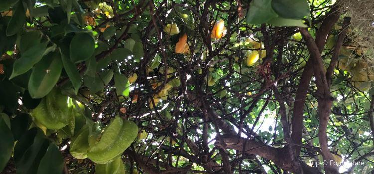 National Tropical Botanical Garden2