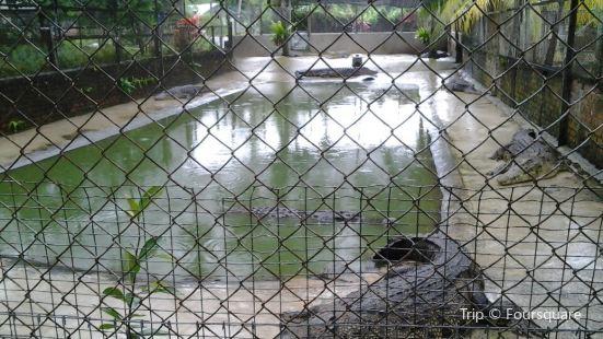 山打根鱷魚養殖場