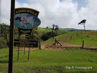 Ambewela Farms