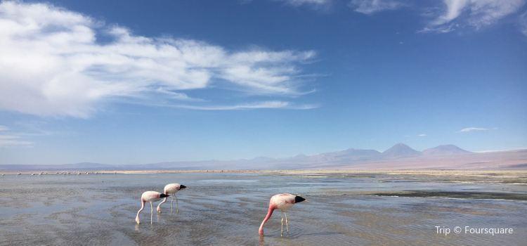 Salar de Atacama3