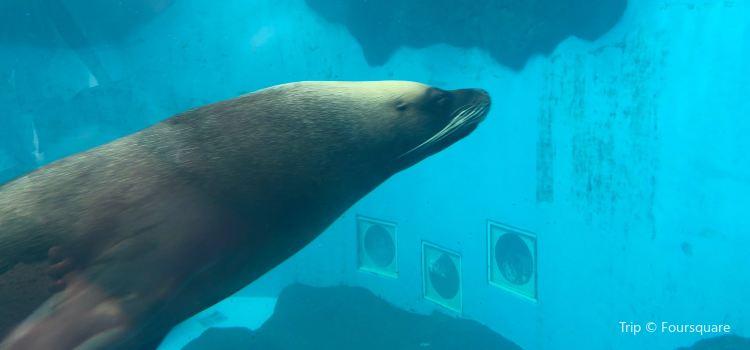 Seals3