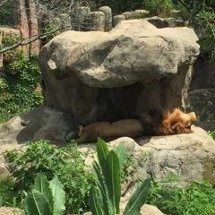 佛蘭克林動物園用戶圖片