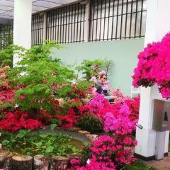 Palmengarten User Photo