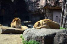 天王寺动物园-大阪-M34****4067