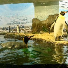 Zurich Zoo User Photo