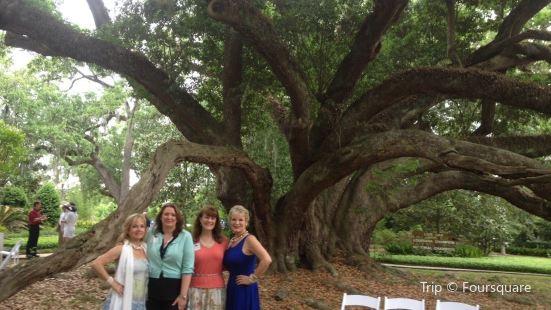 Seven Sisters Live Oak