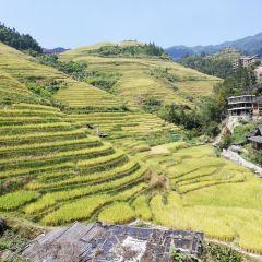 Longji Rice Terrace User Photo