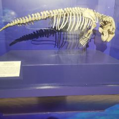 National Museum of Natural History User Photo
