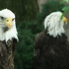 國家鳥類公園用戶圖片