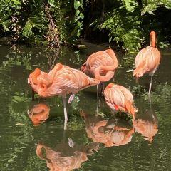 Sarasota Jungle Gardens User Photo
